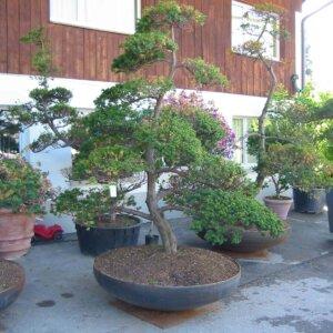 Pflanzentröge